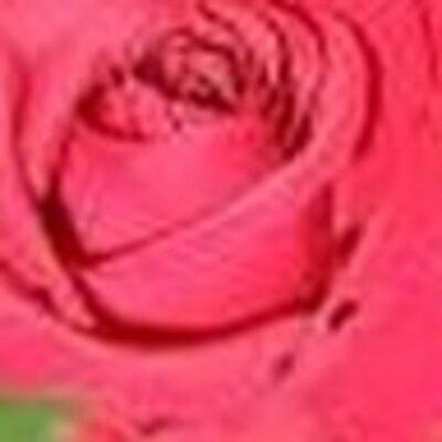 Rose Marcin