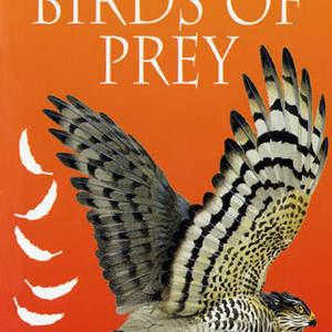 prey.jpg