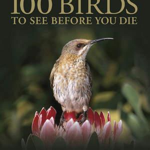 100_Birds.jpg