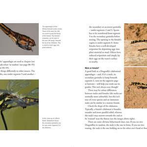 Dragonfly_internals-26.jpg