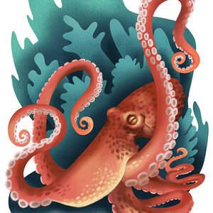 Octopus_LR.jpg