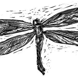 scratchboard-dragonfly.png