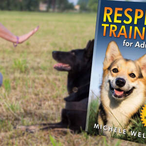 Respect Training for Puppies