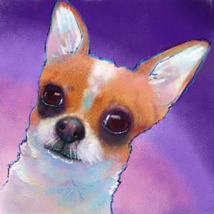 Chihuahua_Penny_Weber.jpg