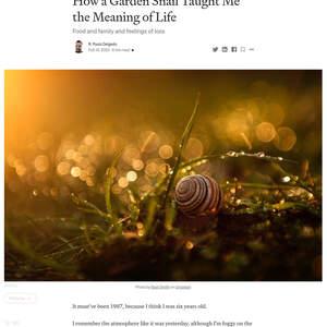 garden-snail.png