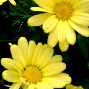 extreme_yellow.jpg
