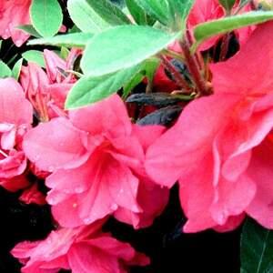 flow_pink.jpg