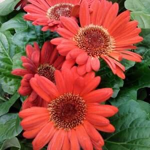 flower_red.jpg