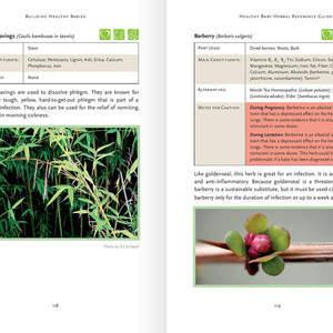 herbs-05.jpg