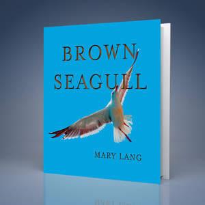 Brown_Seagull.jpg