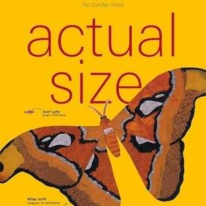 Actual_Size.jpg