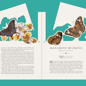 BUTTERFLY_SPREADS_38_39_CUT.png
