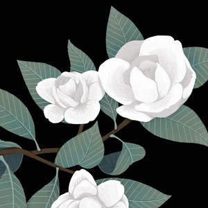 Camelia_Flower_Plant.jpg