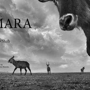The_Mara_1.jpg