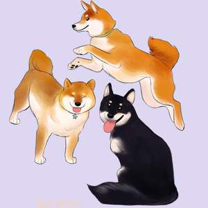 shibes.png
