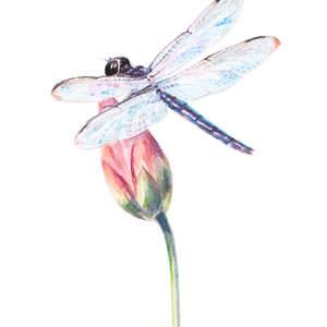 mariya_prytula_dragonfly.jpg