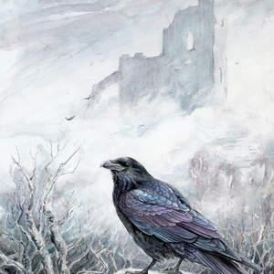 birdwhisperer_raven_web.jpg