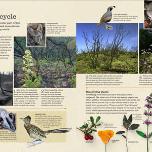 Portfolio_spreads_practical_naturalist_p6.jpg
