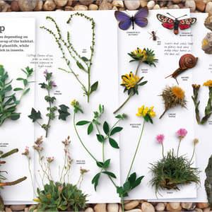 Portfolio_spreads_practical_naturalist_p14.jpg