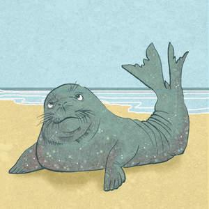 MONK_SEAL-_Sally_Barnett_illustrator_frome_bath_bristol_illustration_ocean_life_animals.jpg