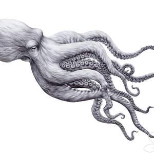 Octopus_in_Ballpoint-Shawn_E_Russell.jpg