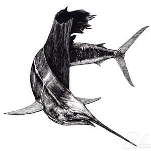 sailfish-shawnerussell.jpg
