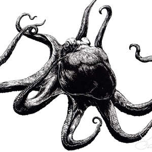 octopus-shawnerussell.jpg
