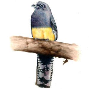 AmberVon_bluebird.jpg