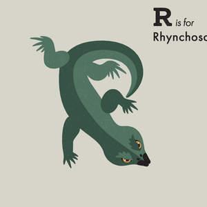 Rhynchosaurus.jpg