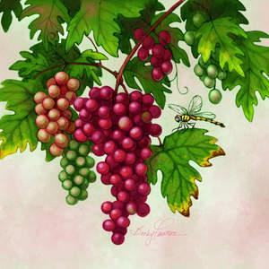 Grapes_BeckyFawson.jpg