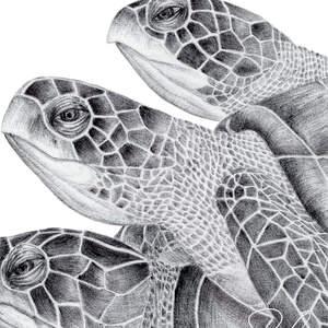 Inktober_2018_Hawksbill_Sea_Turtle-Shawn_E_Russell.jpg