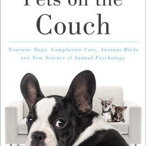 Pets_Couch.jpg