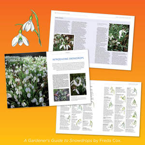 Reedsy_book_pages9.jpg
