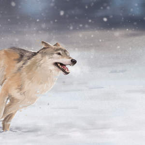 65._Running_Wolf_WEB.jpg