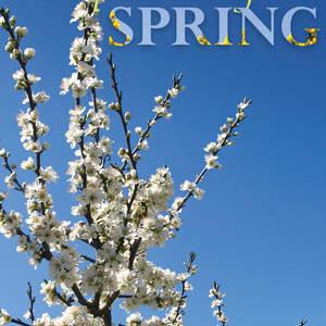 spring01-c1400.jpg