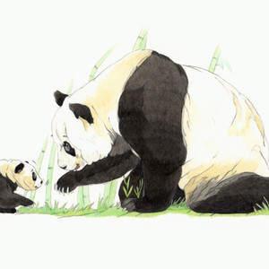 panda_pdonaera.jpg