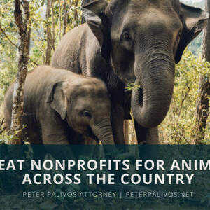 Nonprofits Helping Animals Across America